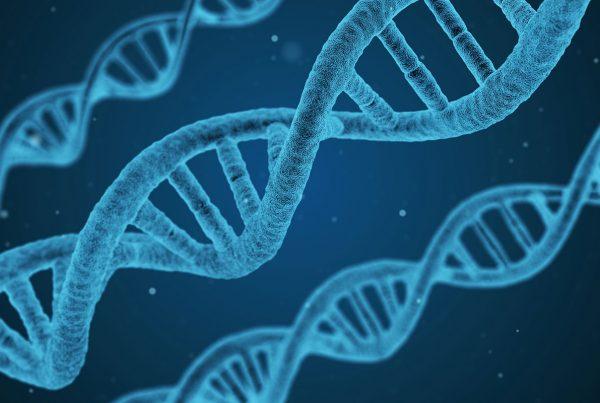 Evoluzione umana, tra biologia e cultura